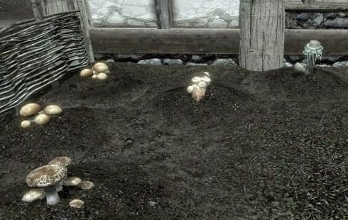 レイクビュー邸キノコ畑